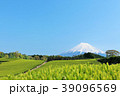 富士山 初夏 茶畑の写真 39096569