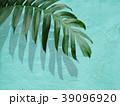 葉 植物 影のイラスト 39096920