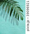 葉 植物 影のイラスト 39096921