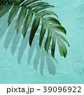 葉 植物 影のイラスト 39096922