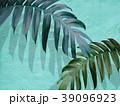 葉 植物 影のイラスト 39096923