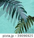葉 植物 影のイラスト 39096925
