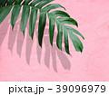 葉 植物 影のイラスト 39096979