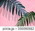 葉 植物 影のイラスト 39096982