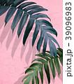 葉 植物 影のイラスト 39096983