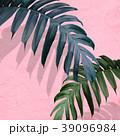 葉 植物 影のイラスト 39096984