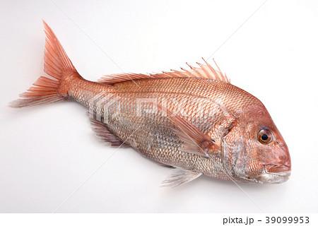 食べ物 魚 お祝い 高級魚 鯛 真鯛 魚介類 食材 海 39099953