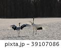 丹頂 鶴 鳥の写真 39107086