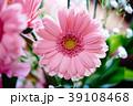 ガーベラ 花 植物の写真 39108468