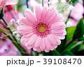 ガーベラ 花 植物の写真 39108470