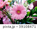 ガーベラ 花 植物の写真 39108471