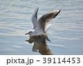鴎 鳥 海鳥の写真 39114453