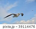 青空を飛ぶカモメ(ウミネコ) 39114476