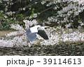 アオサギ 野鳥 鳥の写真 39114613