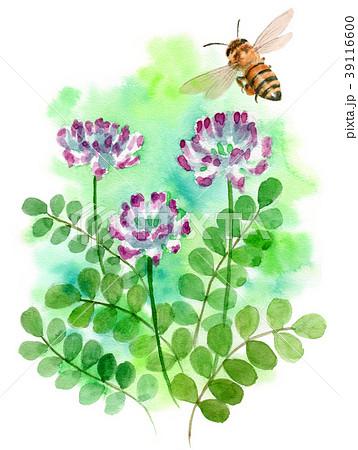水彩で描いたレンゲソウとミツバチ 39116600