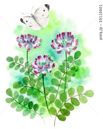 水彩で描いたレンゲソウとモンシロチョウ 39116601