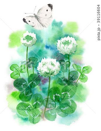 水彩で描いたシロツメクサとモンシロチョウ 39116604