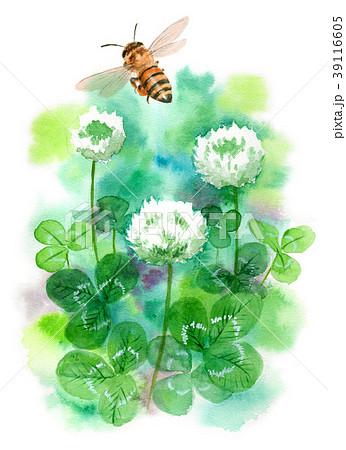 水彩で描いたシロツメクサとミツバチ 39116605