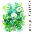 白詰草 花 植物のイラスト 39116608