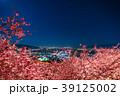 河津桜 春 夜桜の写真 39125002