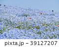 花畑 ネモフィラ みはらしの丘の写真 39127207