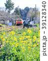 小湊鉄道 里見駅 菜の花の写真 39128340
