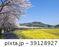 桜 菜の花畑 巾着田の写真 39128927