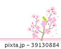 梅 春 花のイラスト 39130884