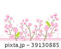梅 春 花のイラスト 39130885