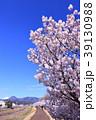 桜 花 土手の写真 39130988