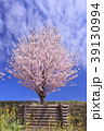 桜 花 木の写真 39130994