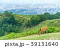若草山 鹿 動物の写真 39131640