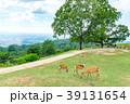 若草山 鹿 動物の写真 39131654