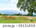 若草山 鹿 動物の写真 39131659