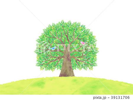 大きな木と小鳥 39131706