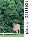 若草山 鹿 動物の写真 39133921