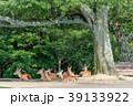 若草山 鹿 動物の写真 39133922
