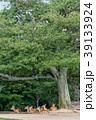 若草山 鹿 動物の写真 39133924