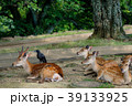 若草山 鹿 動物の写真 39133925