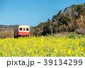 春 小湊鉄道 菜の花の写真 39134299