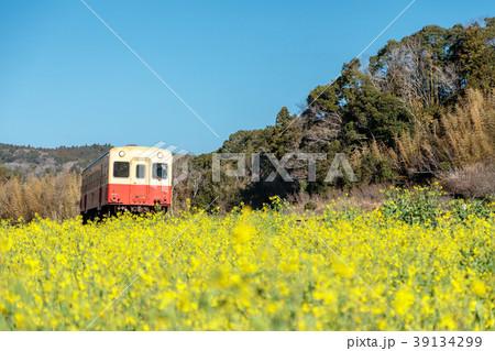 鉄道風景・小湊鉄道 菜の花畑と電車 39134299