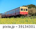 春 小湊鉄道 菜の花の写真 39134301