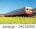 春 小湊鉄道 菜の花の写真 39134302