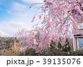 花 桜 春の写真 39135076
