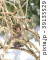 猿 39135529