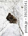 猿 39135541