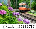 アジサイ咲く箱根登山鉄道 39139733