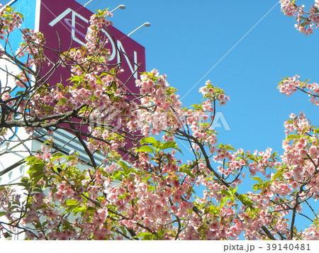 五分葉桜の稲毛海岸駅前カワヅザクの花 39140481