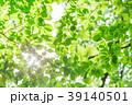 新緑 葉 初夏の写真 39140501