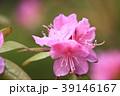 つつじ 花 満開の写真 39146167